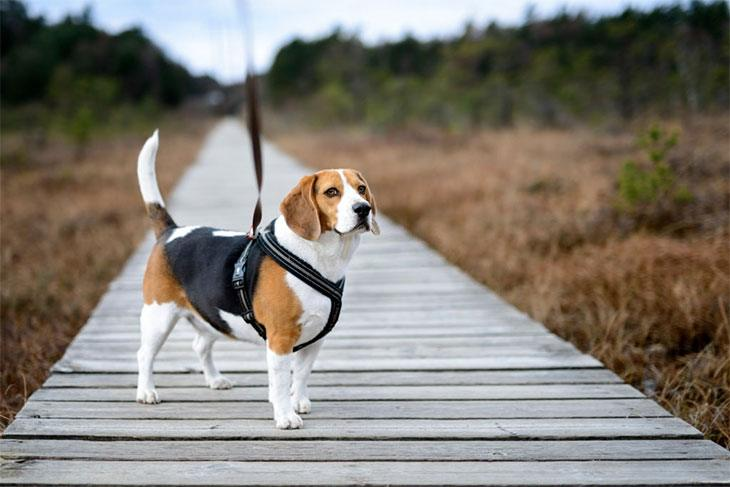best collar or harness for running with dog