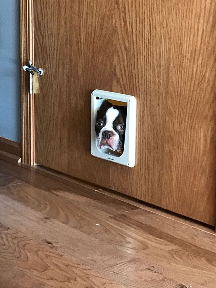 how to install a pet door in a wall