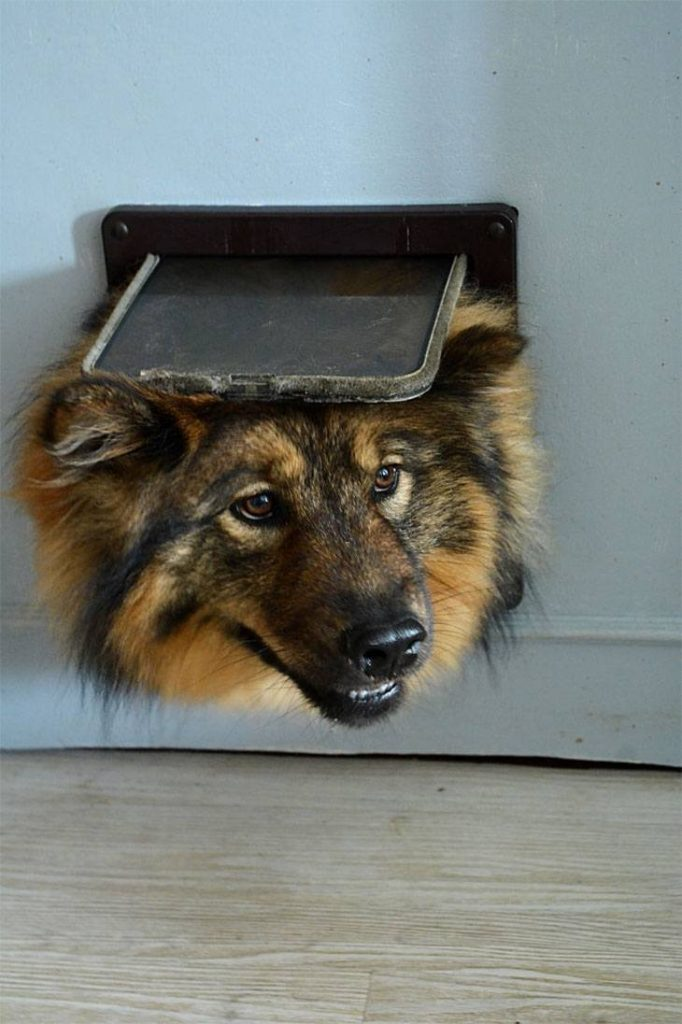 how to install a doggie door in a wall